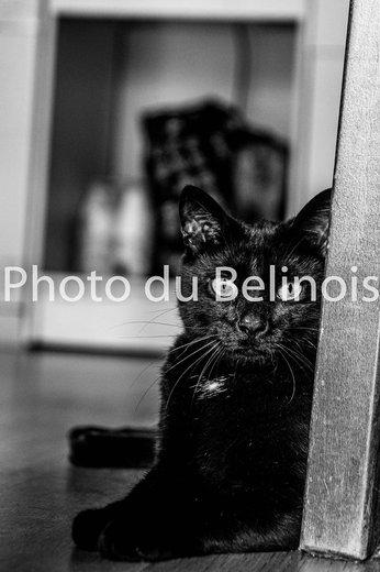Photographe mariage - Photo du Belinois - photo 16