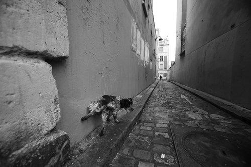 Photographe - dugay dominique - photo 6