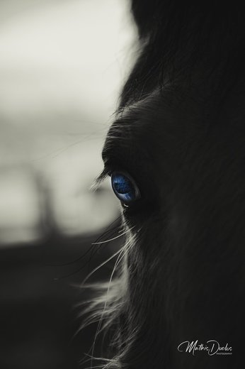 Photographe - Mathis Duclos Photography - photo 8