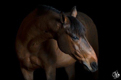 Photographe - Manon Lescarret - Photographe  - photo 104